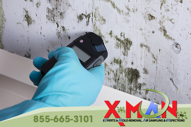 Why is an indoor air quality test for mold important?