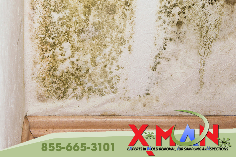 Mold – To Do It Yourself or Not